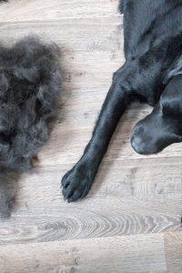 Queda de pelo em cachorro: Tudo que você precisa saber