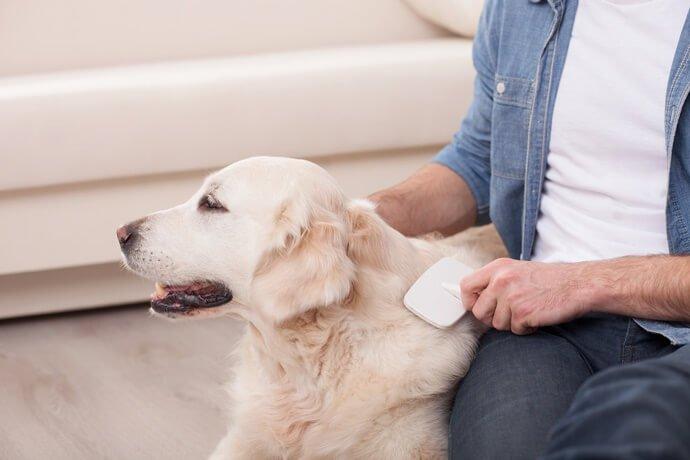 Quanto tempo pode durar uma queda de pelo de cachorro?