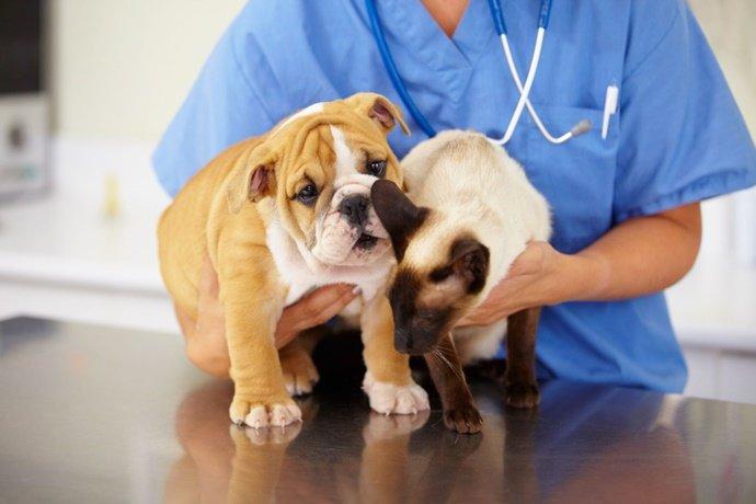Castração gratuita de cães e gatos agora é lei