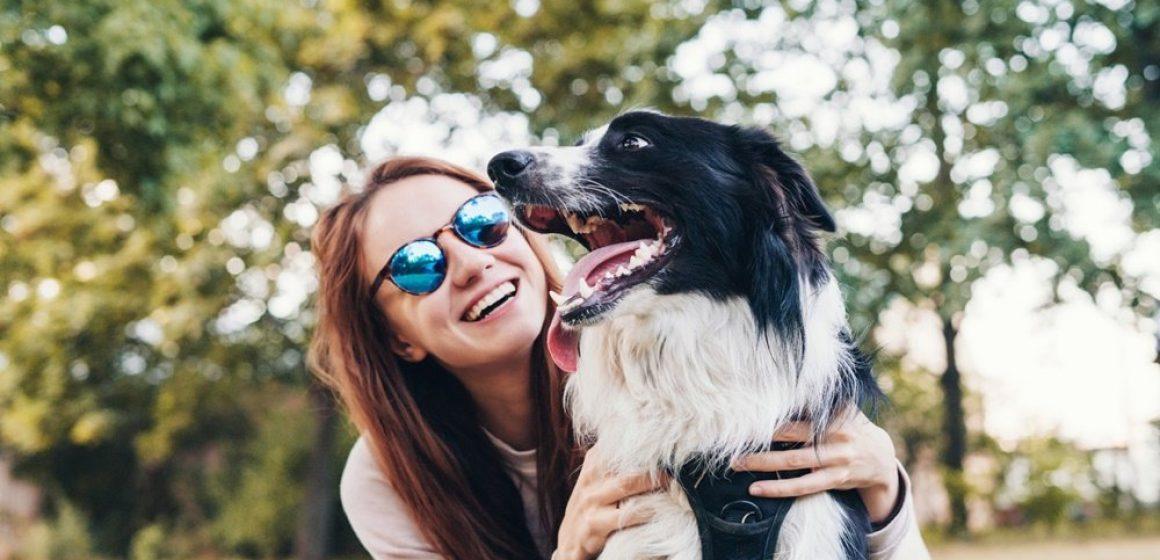Castrar ou não o seu cachorro? Tire todas as suas duvidas