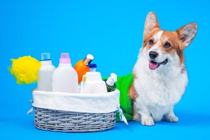 Cuidados com a higiene do seu cachorro