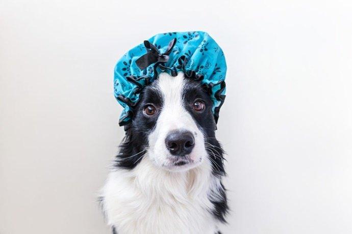 Qual a frequência ideal de banho no cachorro?