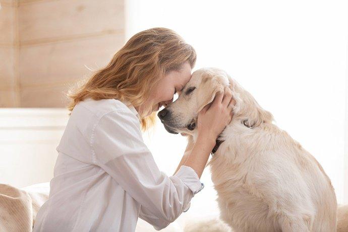 Qual é a vantagem de castrar o seu cachorro?