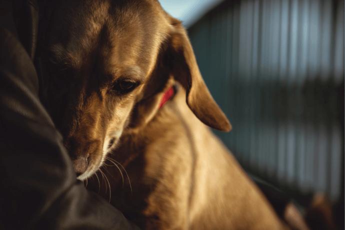 O que fazer se o cachorro tem medo do dono?