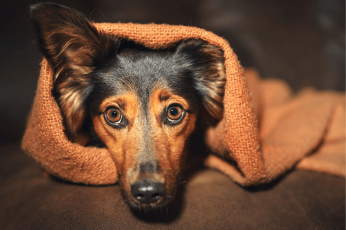 Por que o cachorro tem medo do dono?
