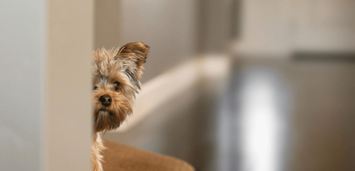 cachorro-com-medo-do-dono