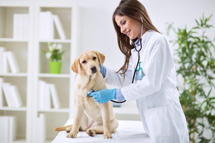 Qual é a importância de uma consulta veterinária?