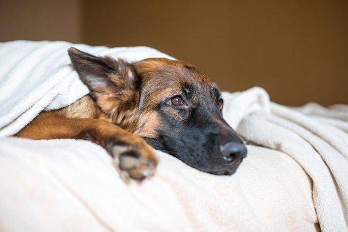 Quando devo levar o meu pet ao veterinário?